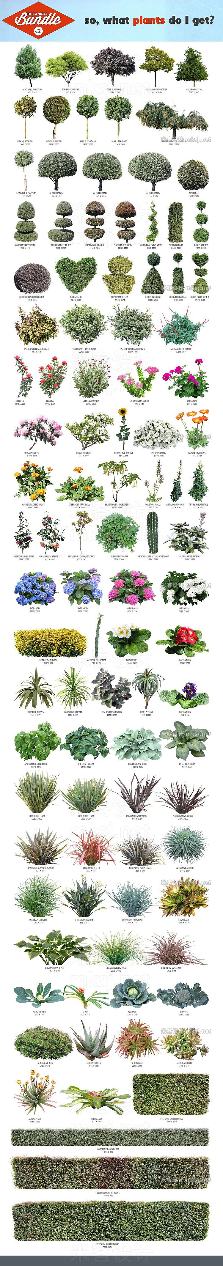 png素材 Botanical Bundle v2