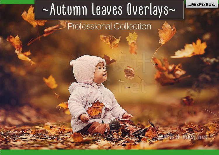 png素材 Autumn Leaves Overlays