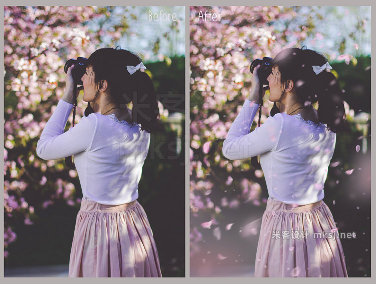 png素材 White and Pink Petals Overlays