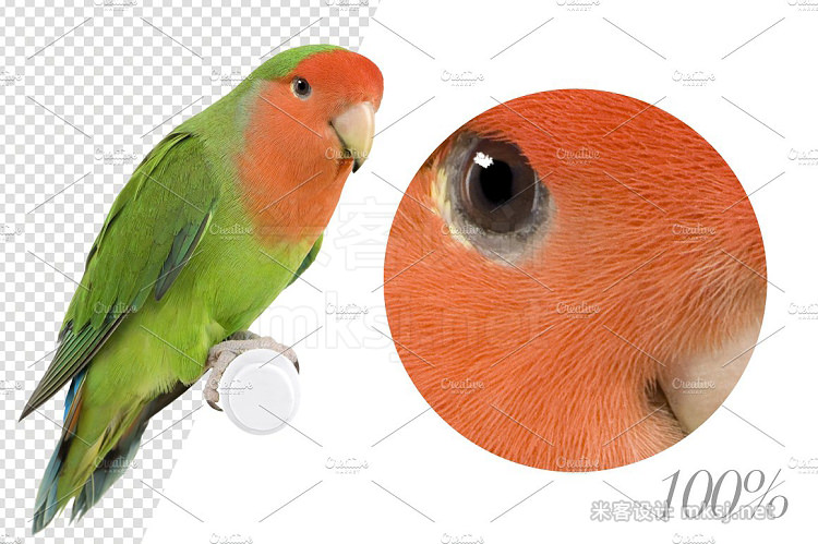 png素材 20 Birds - Cut-out High Res Pictures