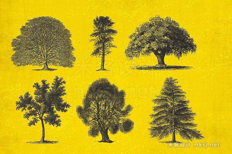 png素材 37 Vintage Tree Illustrations