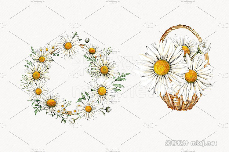png素材 Watercolor Daisies Clipart