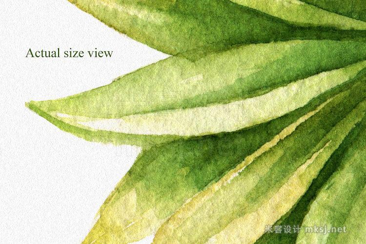 png素材 Watercolor Tropical Leaves