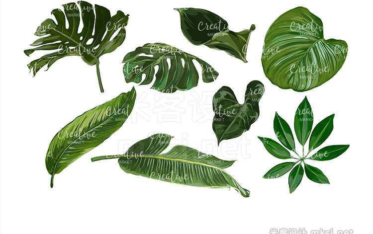 png素材 Tropical Green Vector Collection