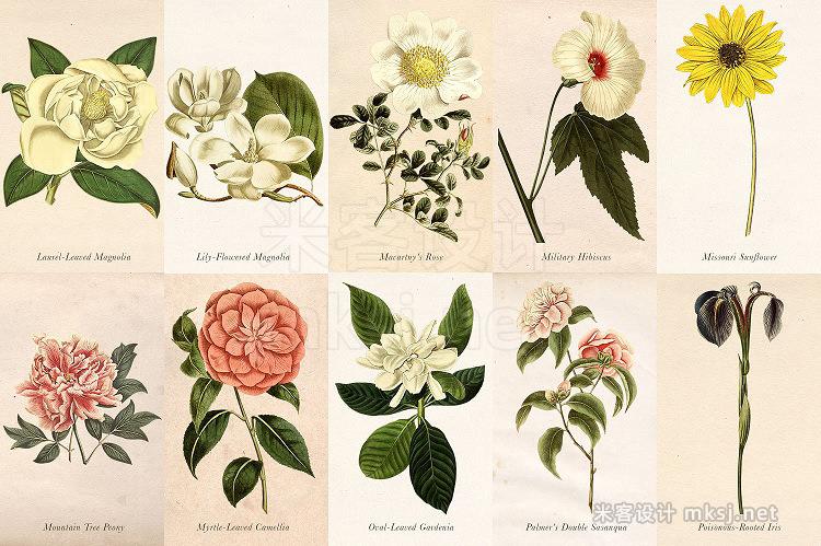 png素材 Antique Floral Botanical Graphics 4