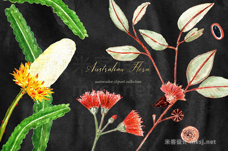 png素材 Australian Flora Watercolor clipart