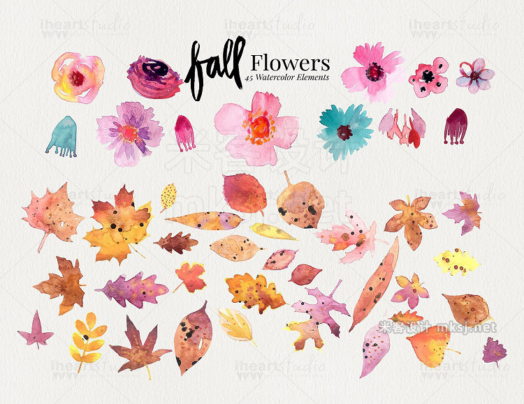 png素材 Fall Flower Watercolors