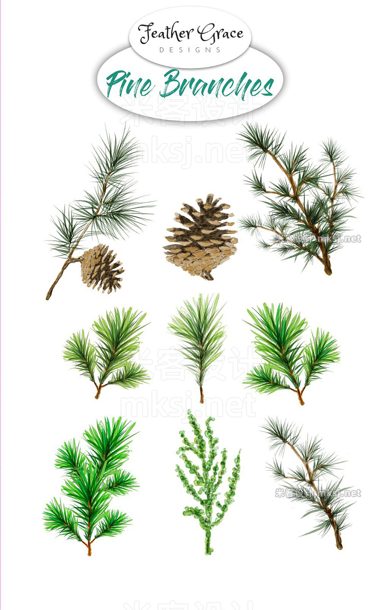 png素材 Pine Branches
