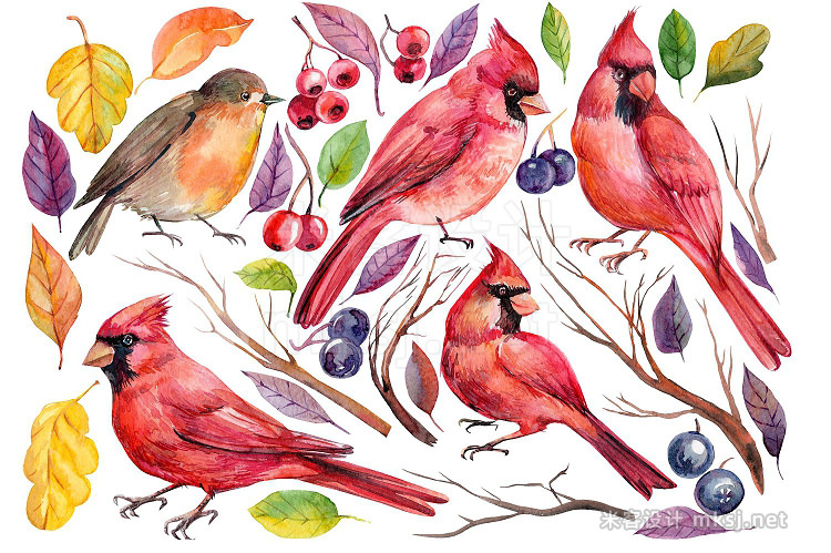 png素材 Winter birds and Floral illustration