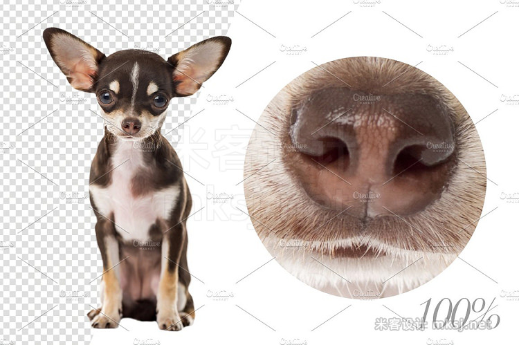 png素材 20 Chihuahuas - Cut-out Pictures