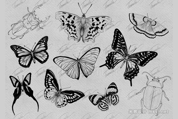 8款艺术蝴蝶procreate笔刷 Butterfly Procreate Stamps Brush